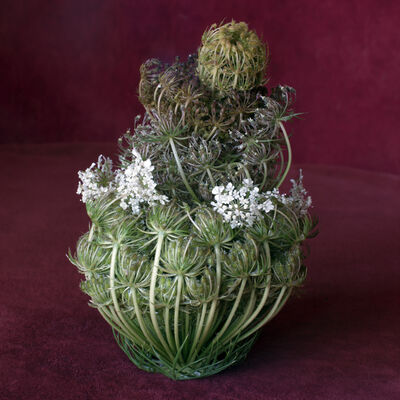 Helen Sear, 'Wild Flower Arrangement No. 4 (Daucus Carota)', 2015