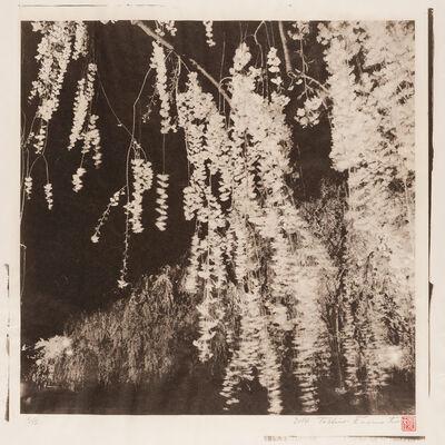 Toshio Enomoto, 'Shidare-Zakura under the Moon 2, Hirosaki Castle, Aomori', 2014
