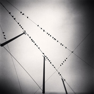 Michael Kenna, 'Fifty Two Birds, Zurich, Switzerland', 2008