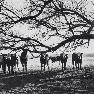 Scott T. Baxter, 'The Girls, The Carlink Ranch, Pima County', 2011