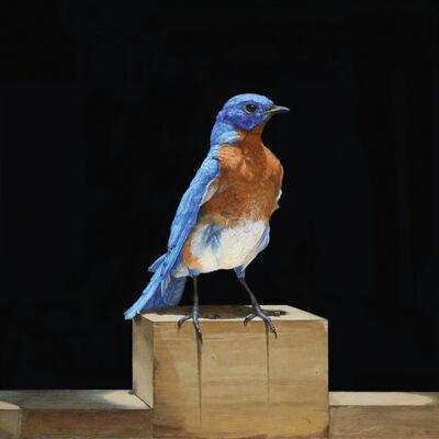 Patricia Traub, 'Eastern Blue Bird', 2020