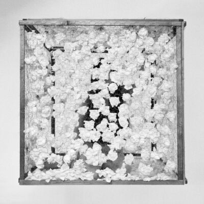 Romina de Novellis, 'La Gabbia', 2016