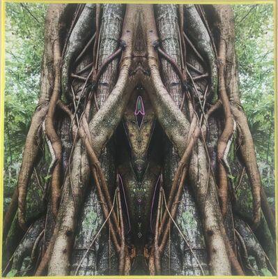 Khotan Fernandez, 'Enchanted Forest V', 2019