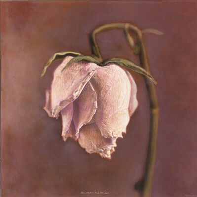 Kate Breakey, 'Rosa, Hybrid Tea Rose', 1999