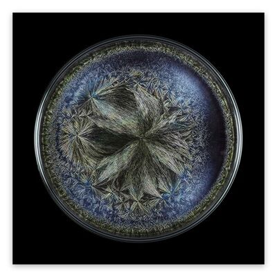 Seb Janiak, 'Morphogenetic Field - Beluga caviar (Large)', 2016