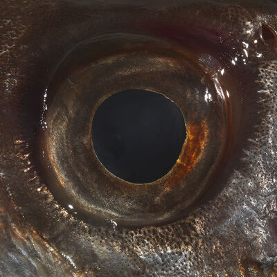 Bruna Esposito, 'Eye', 2016