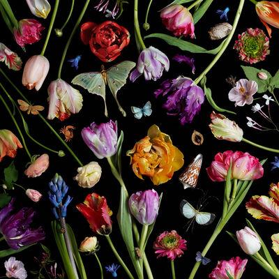 Paulette Tavormina, 'Botanical VII (Tulips)', 2014