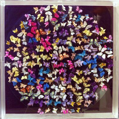 Michael Olsen, 'Butterflies, purple', 2016