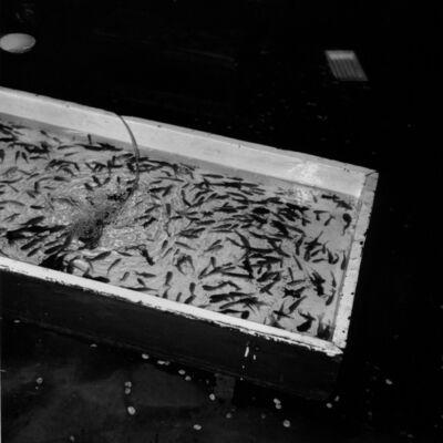 Toshio Enomoto, '062-Yasaka Shrine approach', 1988
