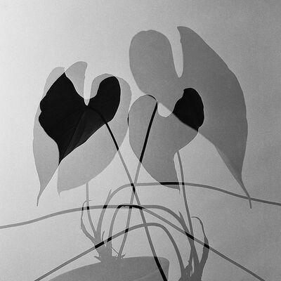 German Lorca, 'Anthuriums.', 1960
