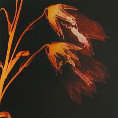 Angelika Krinzinger, 'Leave', 2003