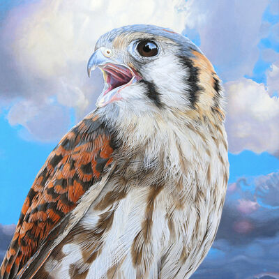Rick Pas, 'Screaming Young Kestrel 2', 2017