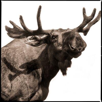 Nine Francois, 'Moose I', 2017