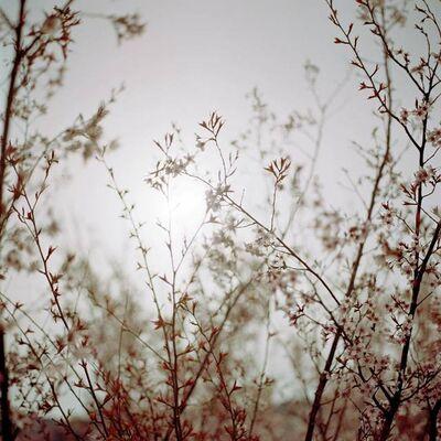 Darren Almond, 'Fullmoon@Sakura Hanami', 2008