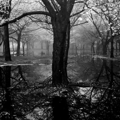 Toshio Enomoto, '017 - Cherry tree woods in Yoyogi Park after a spring storm', 1994