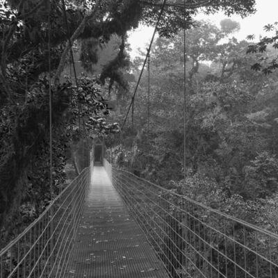 Javier Hinojosa, 'Monteverde, Costa Rica', 2009