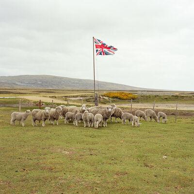 Jon Tonks, 'Sheep'
