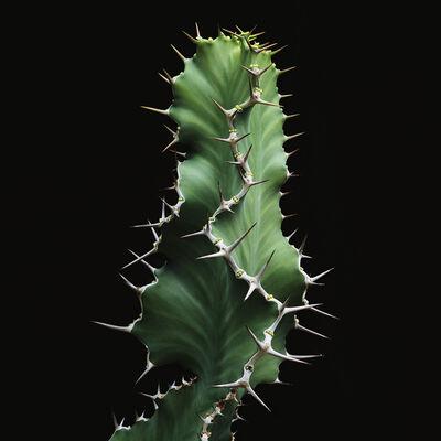 Thomas Balaÿ, 'Euphorbia cactus', 2016