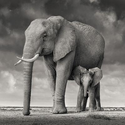David Burdeny, 'Elephant Mother and Child, Amboseli, Kenya ', 2020
