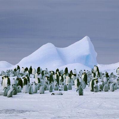 David Burdeny, 'Penguins Snow Hill Island'