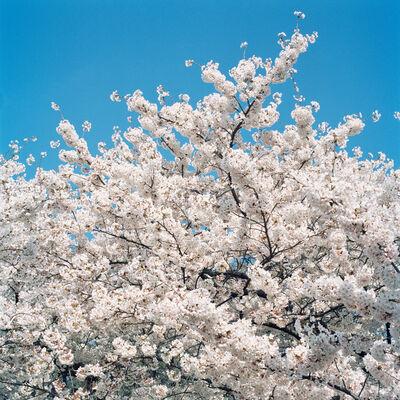 Sally Gall, 'Blossom #1', 2005