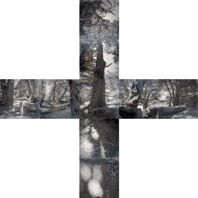 Tama Hochbaum, 'Cypress, Sea Ranch (From the Crosswalks)', 2016