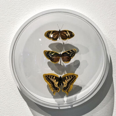 Esther Traugot, 'Brown Gold three butterflies', 2019