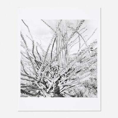 Lee Friedlander, 'Sonora, Arizona 1101-31', 1995
