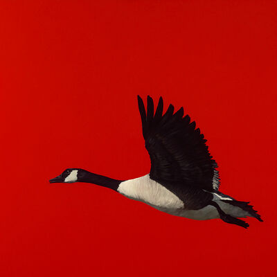 James Lahey, 'Canada Goose (from Made in Canada) 180914-02', 2018