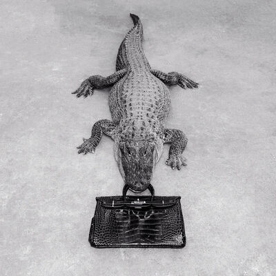 Tyler Shields, 'Gator Birkin Monochrome', 2014
