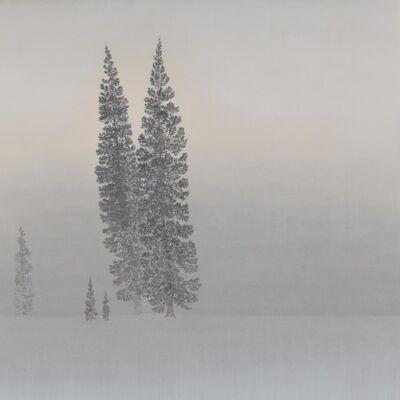 Shigemi Yasuhara, 'Cedar Trees in The Snow Field', 2021
