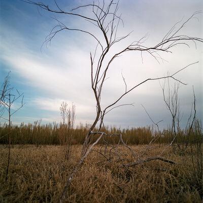 Allison V. Smith, 'Green Ranch. Albany, Texas', 2014