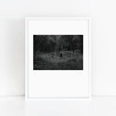 Youki Hirakawa, 'One Tree, Two Stumps'