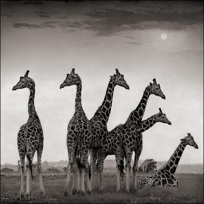 Nick Brandt, 'Giraffe Fan, Aberdares', 2000