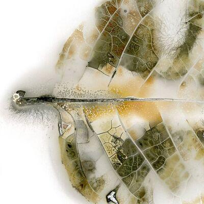Edward Bateman, 'Leaf No. 39c2', 2019