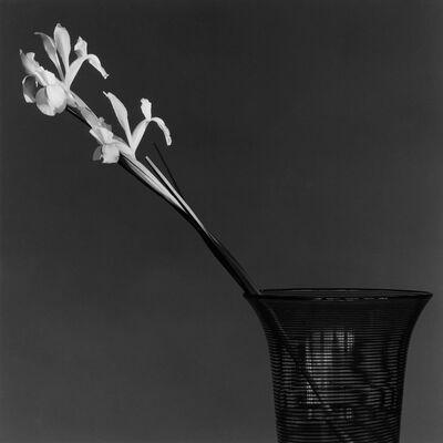 Robert Mapplethorpe, 'Iris', 1982