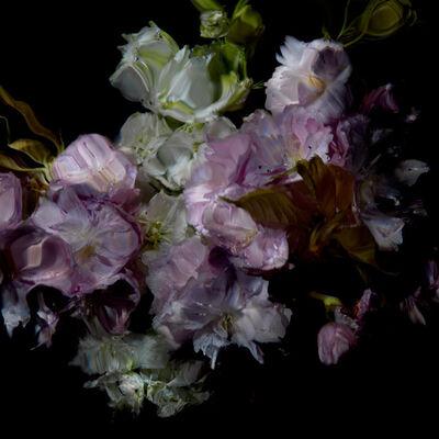Alexander James Hamilton, 'Floral Study [0503]', 2012