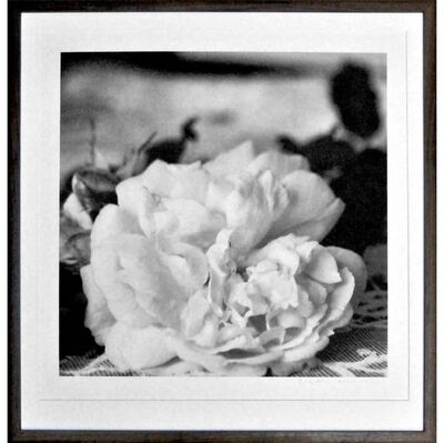 Brigitte Carnochan, 'A Set of Six Platinum Prints', 1996-2002