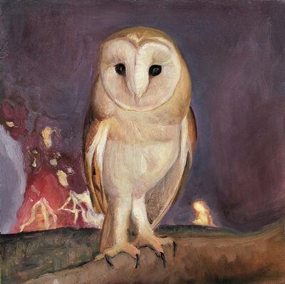 David Molesky, 'Barn Owl', 2014