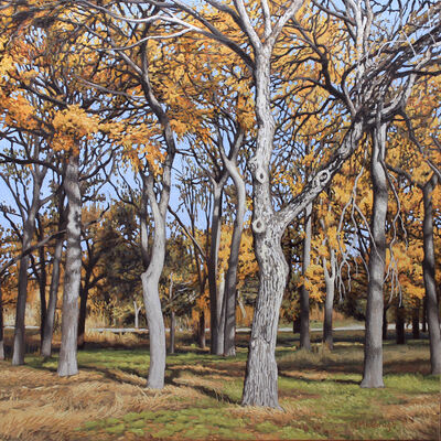 Garrett Middaugh, 'Onion Creek Park Trees II'
