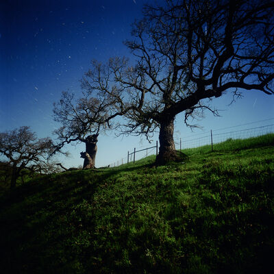 Darren Almond, 'California North Star', 2005
