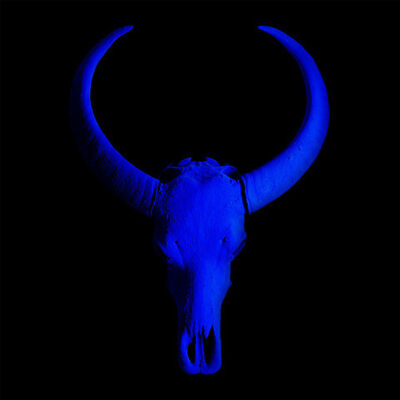 Angela Morris-Winmill, 'Chinese Water Buffalo Skull – All Blue Skull on Black - Large', 2018
