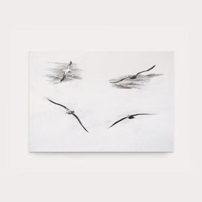 Sax Impey, 'Albatross Studies', 2019