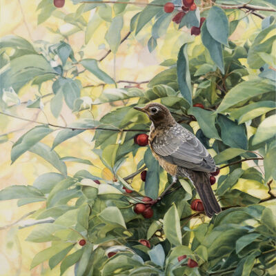 Diane Andrews Hall, 'Juvenile Robin'