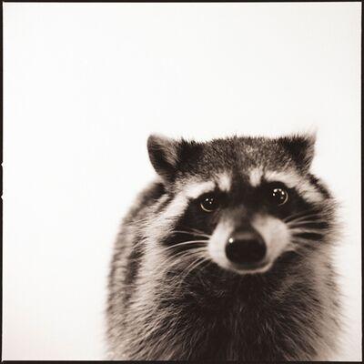 Nine Francois, 'Raccoon', 2015