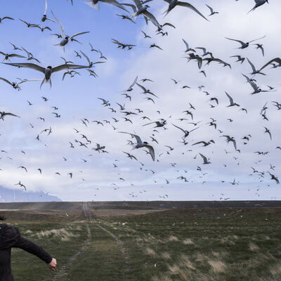 Cig Harvey, 'The Judgement of Terns', 2016