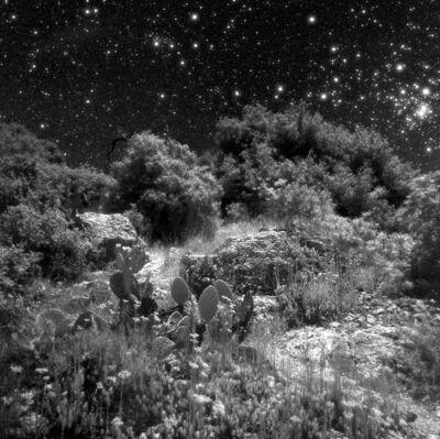 Neil Folberg, 'Cactus', 1997
