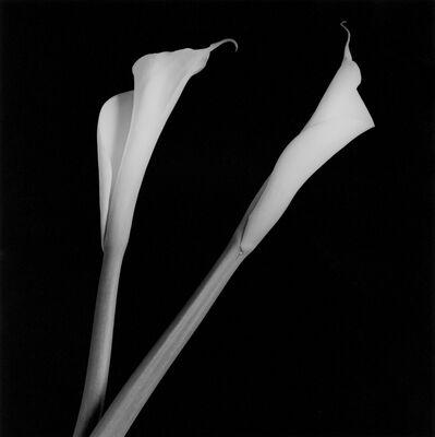 Robert Mapplethorpe, 'Calla Lilies', 1985