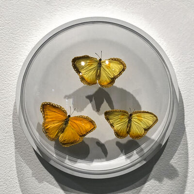 Esther Traugot, 'Golden three butterflies', 2019