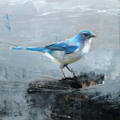 Alpay Efe, 'Studio Note with Scrub Jay', 2017